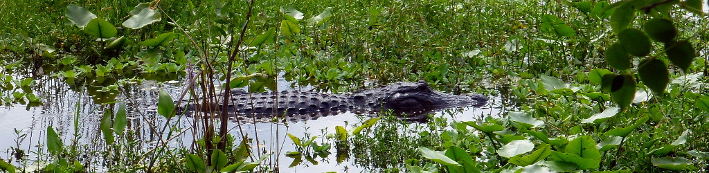 Everglades_Miami_USA2013.JPG